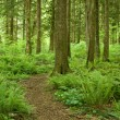 Stock Photo: Winding forest path