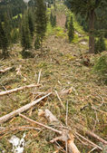 Avalanche Debris — Stock Photo