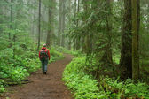 Pacific northwest forest hiker — Stock Photo
