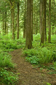 Winding forest path — Stock Photo
