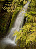 Waterfall behind cedar boughs — Stock Photo