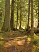 Moss draped forest — Stock Photo