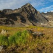 Grizzly mountian in Yukon Territory — Stock Photo