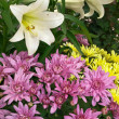 Stock Photo: Easter lilies and chrysanthemums