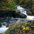 Stock Photo: Autumn leaves alonside mountain stream