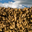 Stacks of Pine Logs — Stock Photo