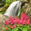 Stock Photo: Pink astilbe and waterfall