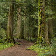 Stock Photo: Pacific Northwest forest and trail