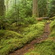 Stock Photo: Old growth Forest Path
