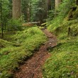 Stock Photo: Old growth forest path portrait