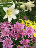 Easter lilies and chrysanthemums — Stock Photo