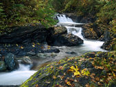 Autumn leaves alonside a mountain stream — Stock Photo