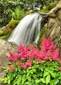 Pink astilbe and waterfall — Stock Photo