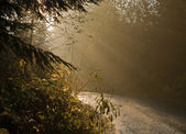 Sunbeams on a country road — Stock Photo