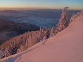 Snowy forest ridge — Stock Photo