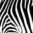 Zebra print - Stock Vector