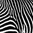 Stock Vector: Zebra pattern large