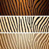 Zebra variation — Stock Vector