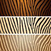 Zebra variation — Stock Vector