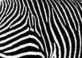 Zebra pattern large — Stock Vector