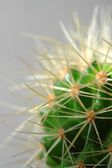 Kaktusar — Stockfoto