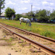 Foto Stock: Railway and horse