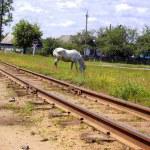 kolejowej i koń — Zdjęcie stockowe