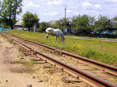 Railway and horse — Stock Photo