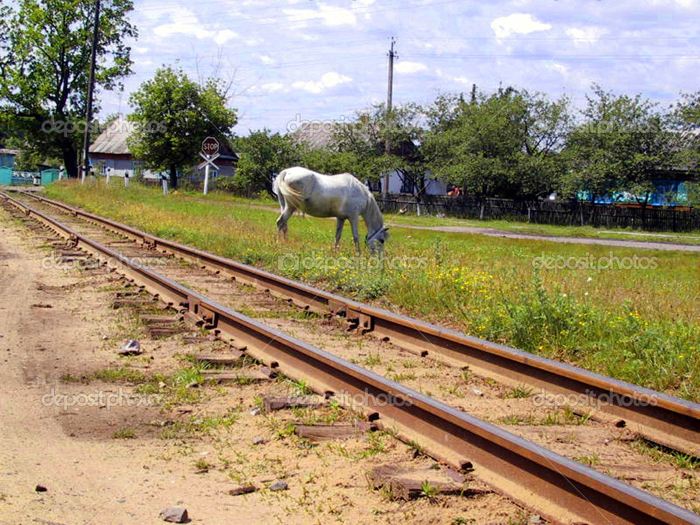 The narrow-gauge railway and white horse  Stock Photo #2025799