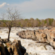 Gaunt tree in front of Great Falls — Zdjęcie stockowe #1022445