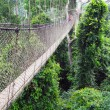 Aerial walkway at Kakum in Ghana - Stock Photo
