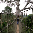 Royalty-Free Stock Photo: Aerial Walkway at Kakum