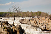 Gaunt tree in front of Great Falls — Stock Photo