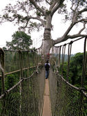 Aerial Walkway at Kakum — Stock Photo