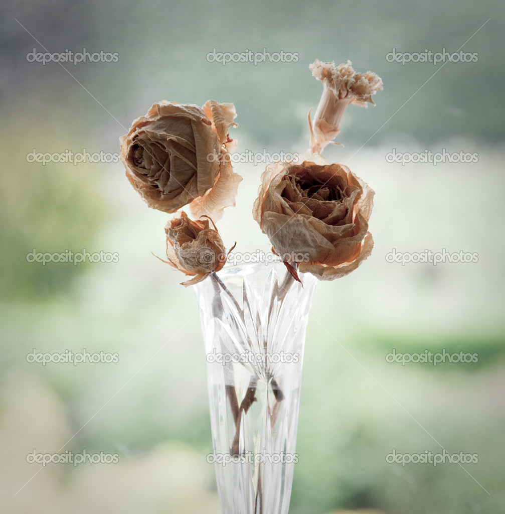 Ancient flowers showing decay due to old age — Stock Photo #1023525