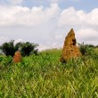 Termite Mound in GhanWest Africa — Stock Photo #1093300