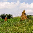 Termite Mound in Ghana West Africa — Stock Photo