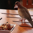 图库照片: Bird considering its chances of food
