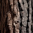 Close up of burnt tree trunk — Stock Photo