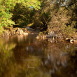 Slow motion water in secluded river — Stock Photo