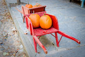 Pumpkins in red barrow — Stock Photo