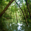 Green flooded valley — Stock Photo