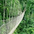 Walkway in rain forest - Stock Photo