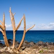 Bare tree limbs by the ocean — Stock Photo