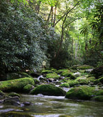 Rural River with Mossy Rocks — Stock Photo