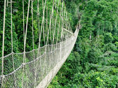 Passarela na floresta tropical — Foto Stock