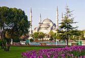 Blue Mosque 2 — Stock Photo