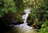 Rushing River through narrow gorge — Stock Photo