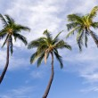 Three palm trees — Stock Photo