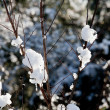Snow on bare twigs in winter — Foto de stock #1444964
